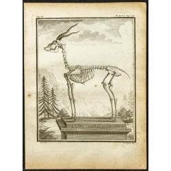 1764 - Squelette d'une...