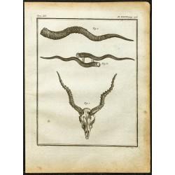 1764 - Cornes d'Antilope