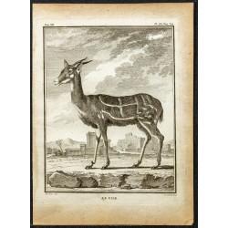 1764 - Guib harnaché