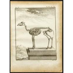 1764 - Squelette de...