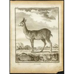 1764 - Redunca ou Nagor