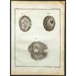 1764 - Poche de musc