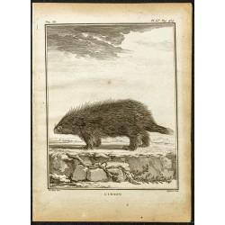 1764 - Porc-épic d'Amérique