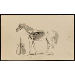 1882 - Appareil...