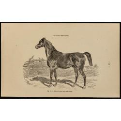 1882 - Étalon de pur sang...