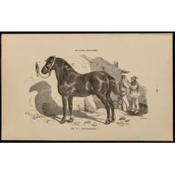 1882 - Cheval de race...