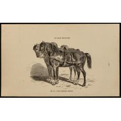 1882 - Chevaux de race...