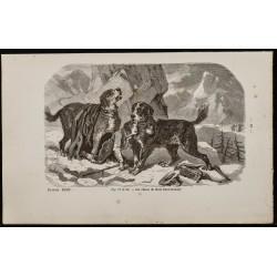 1867 - Chiens Saint-Bernard...