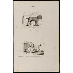 1867 - Chien barbet et un...