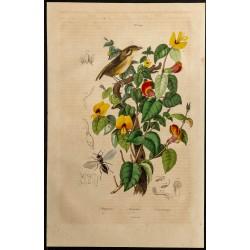 1839 - Platygaster &...
