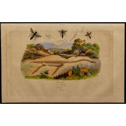 1839 - Squelette de...