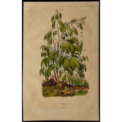 1839 - Plocama