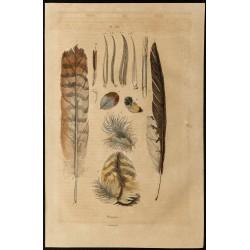1839 - Plumes d'oiseaux