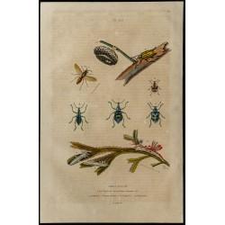 1839 - Insectes divers et...