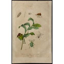 1839 - Nombreux insectes en...