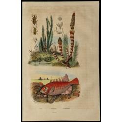 1839 - Sciences naturelles