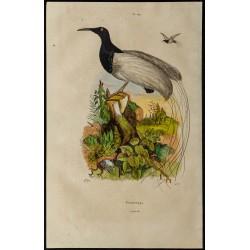 1839 - Oiseau promerops