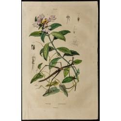 1839 - Proscopia &...
