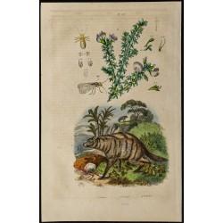 1839 - Protèle, Psocoptères...