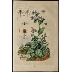 1839 - Pucerons, punaises &...