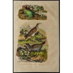 1839 - Rainette verte et Râle