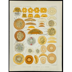 1879 - Lithographie...