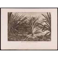1880 - Marais de l'Atrato...