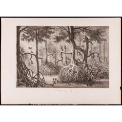1880 - Mangliers de la...
