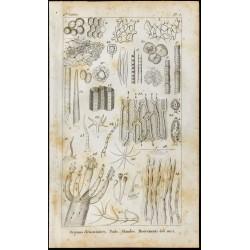 1848 - Gravure biologie :...