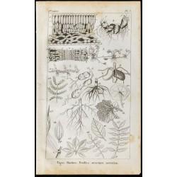 1848 - Tiges et Racines -...