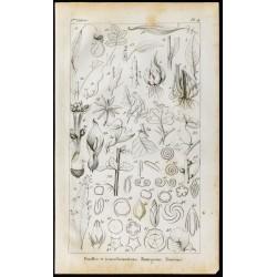 1848 - Feuilles et...