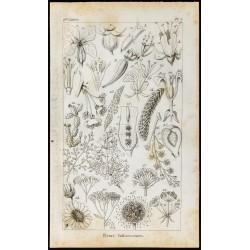 1848 - Botanique - Fleurs...