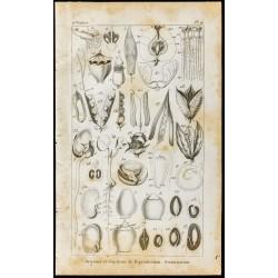 1848 - Fleurs - Organes et...